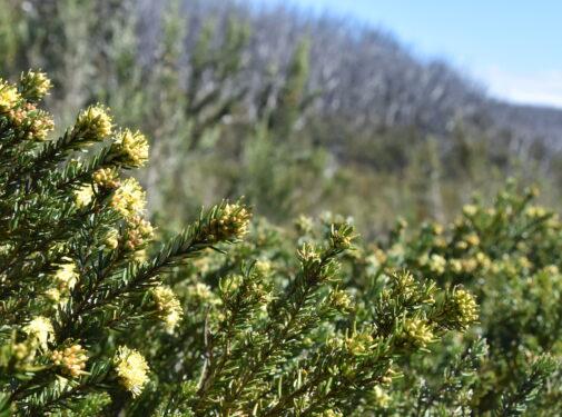 native plants at lake mountain